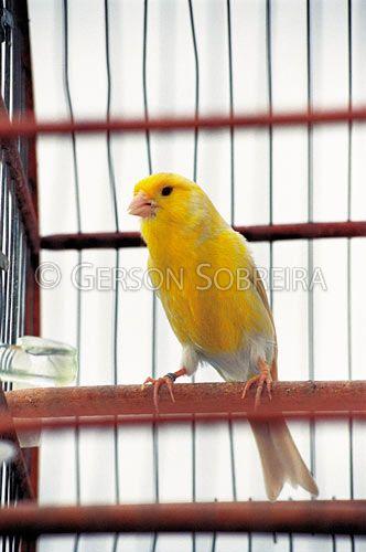 http://www.terrastock.com.br/images/full/A1453.jpg